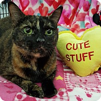Domestic Shorthair Cat for adoption in Wayne, New Jersey - Lucy