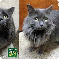 Adopt A Pet :: Murtaugh & Riggs - Oakville, ON