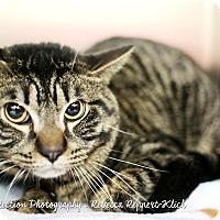 Adopt A Pet :: Rafiki *Petsmart* - Appleton, WI