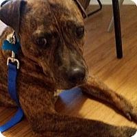 Adopt A Pet :: Gus - Holmes Beach, FL