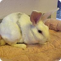 Adopt A Pet :: Beau - Bonita, CA