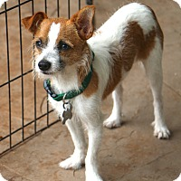 Adopt A Pet :: Marbles - Woonsocket, RI