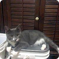 Adopt A Pet :: Mickey - Raleigh, NC