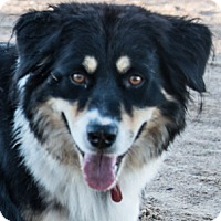 Adopt A Pet :: Lady - Corrales, NM