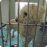 Adopt A Pet :: NINA - Upland, CA