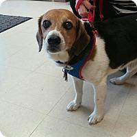 Adopt A Pet :: Bert - Dumfries, VA