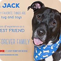Adopt A Pet :: A -Jack - Portland, OR