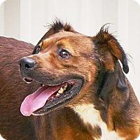 Adopt A Pet :: Bobo  $ 10 - Lincolnton, NC