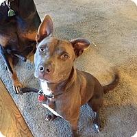 Adopt A Pet :: Fenway - Merriam, KS
