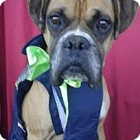 Adopt A Pet :: HENRY - Santa Monica, CA