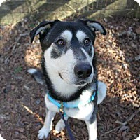 Adopt A Pet :: Balto - Mebane, NC