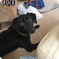 Adopt A Pet :: Maximillian (MD) - New York, NY