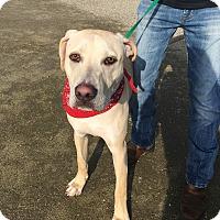 Adopt A Pet :: Axton - Visalia, CA