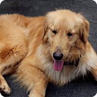 Adopt A Pet :: Milan - Washington, DC