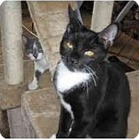 Adopt A Pet :: Casper - Clay, NY