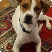 Adopt A Pet :: Benji - Homewood, AL