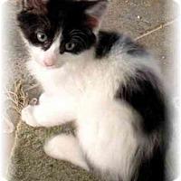 Adopt A Pet :: Tammy - Irvine, CA