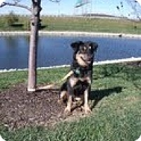 Adopt A Pet :: Buffy - Lewisville, IN