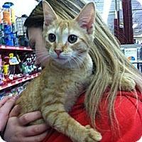 Adopt A Pet :: Salsa - Riverhead, NY