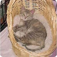 Adopt A Pet :: Cookie Dough - Jenkintown, PA