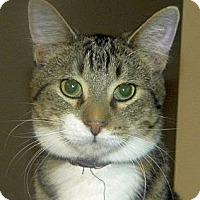 Adopt A Pet :: Emilio - Green Bay, WI