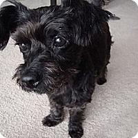 Adopt A Pet :: Macey - Hamilton, ON