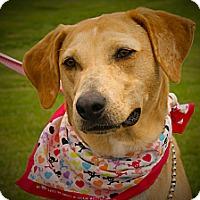 Adopt A Pet :: Sandy - Princeton, KY