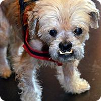 Adopt A Pet :: Jake-Adoption pending - Bridgeton, MO