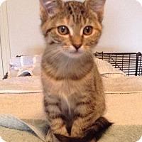Adopt A Pet :: Calinda - Irvine, CA
