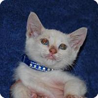 Adopt A Pet :: Bubbles - La Jolla, CA