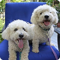 Adopt A Pet :: Brick NJ - Brady & Kodi - New Jersey, NJ