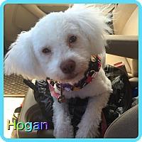 Adopt A Pet :: Hogan - Hollywood, FL