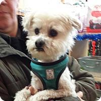Adopt A Pet :: Milo - Toronto, ON