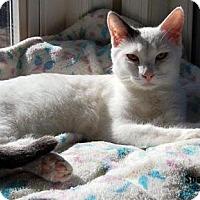 Adopt A Pet :: Sparkie - Fullerton, CA