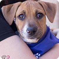 Adopt A Pet :: Jack - Grand Rapids, MI
