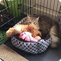 Adopt A Pet :: Memzi - Ruther Glen, VA