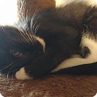 Adopt A Pet :: Buttercup - Marietta, GA