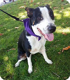 Terrier (Unknown Type, Medium) Mix Dog for adoption in Detroit, Michigan - Miso