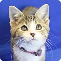 Adopt A Pet :: Miranda - Winston-Salem, NC