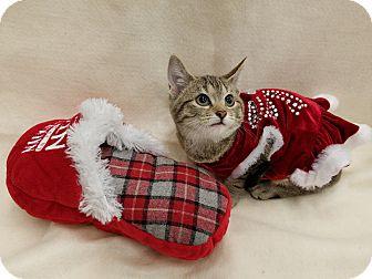 Domestic Shorthair Kitten for adoption in Northfield, Ohio - Precious