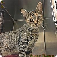 Adopt A Pet :: H-3 - Triadelphia, WV