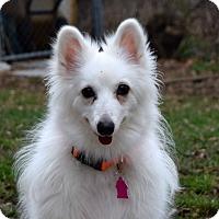 Adopt A Pet :: Chencha - Pontiac, MI