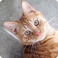 Adopt A Pet :: Ferrous - Montgomery City, MO
