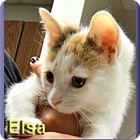 Adopt A Pet :: Elsa - Aldie, VA