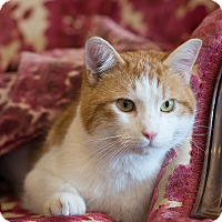 Adopt A Pet :: Hercules - Boise, ID