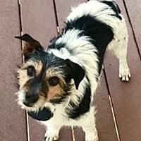 Adopt A Pet :: Rosie in Enid, OK - Austin, TX
