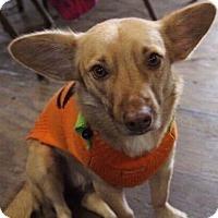 Adopt A Pet :: ZEVIA - Tampa, FL