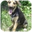 Photo 2 - German Shepherd Dog/Hound (Unknown Type) Mix Dog for adoption in Pike Road, Alabama - Scamper