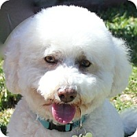 Adopt A Pet :: Damien - La Costa, CA