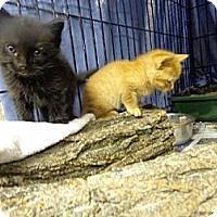 Adopt A Pet :: Peanut - Wakinsville, GA